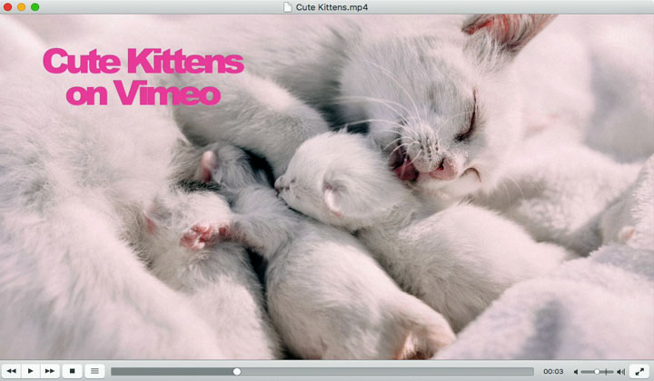 Cute Kittens on Vimeo